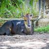 SD Zoo 2016-343