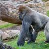 SD Zoo 2016-240