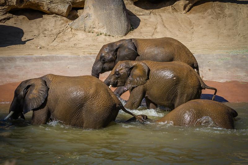 SD Zoo 2016-140