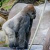 SD Zoo 2016-315