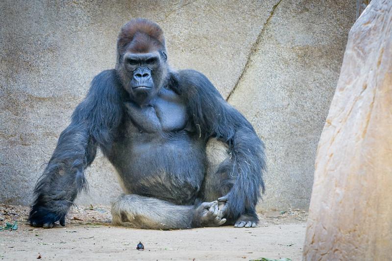 SD Zoo 2016-164