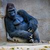 SD Zoo 2016-293