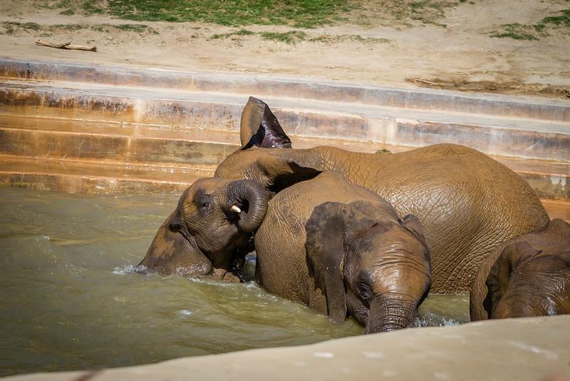 SD Zoo 2016-215