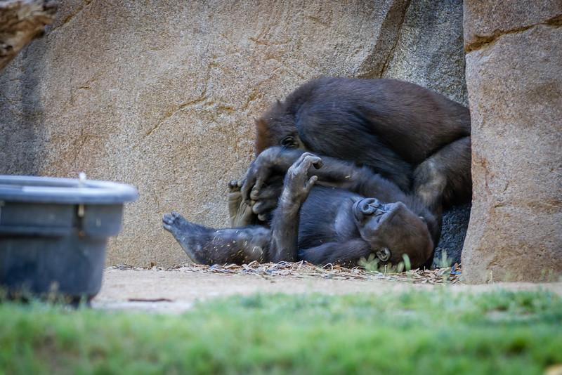 SD Zoo 2016-284