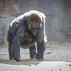 SD Zoo 2016-273