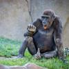 SD Zoo 2016-323
