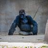 SD Zoo 2016-72