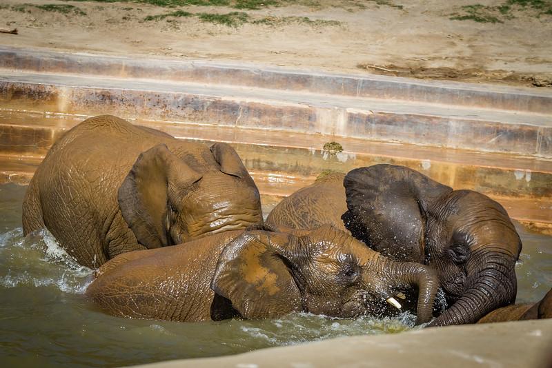 SD Zoo 2016-206
