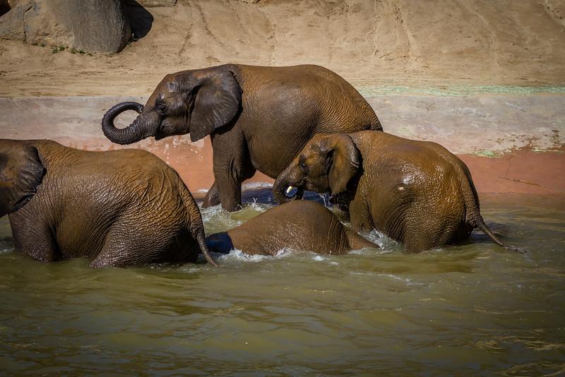 SD Zoo 2016-364