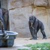 SD Zoo 2016-324