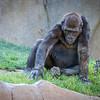 SD Zoo 2016-189