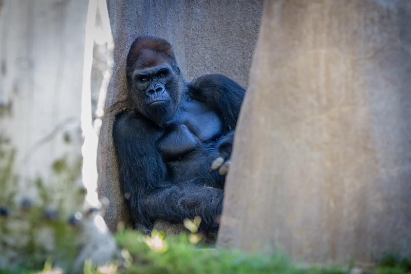 SD Zoo 2016-301