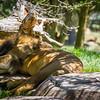 SD Zoo 2016-118