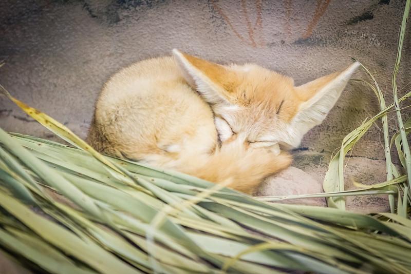 SD Zoo 2016-253