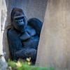 SD Zoo 2016-281