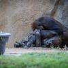 SD Zoo 2016-132