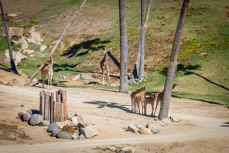 SD Zoo 2016-94