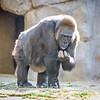SD Zoo 2016-218