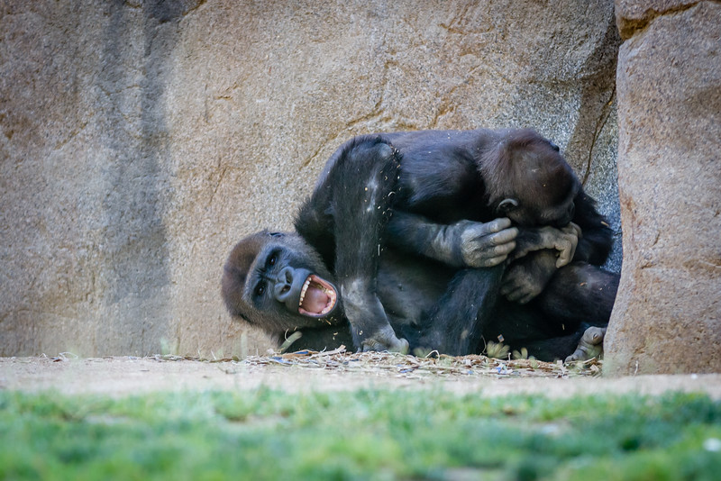 SD Zoo 2016-10-2