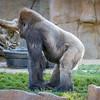 SD Zoo 2016-138