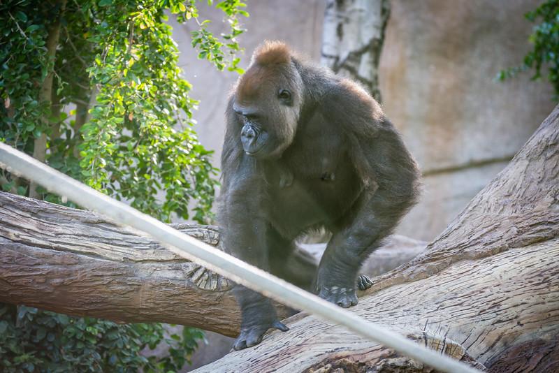 SD Zoo 2016-271