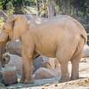 SD Zoo 2016-386