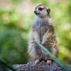 SD Zoo 2016-321