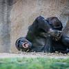 SD Zoo 2016-371