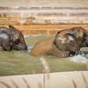 SD Zoo 2016-147