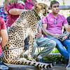 SD Zoo 2016-77