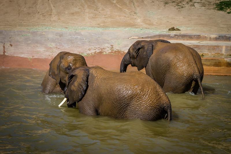 SD Zoo 2016-223