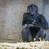 SD Zoo 2016-101