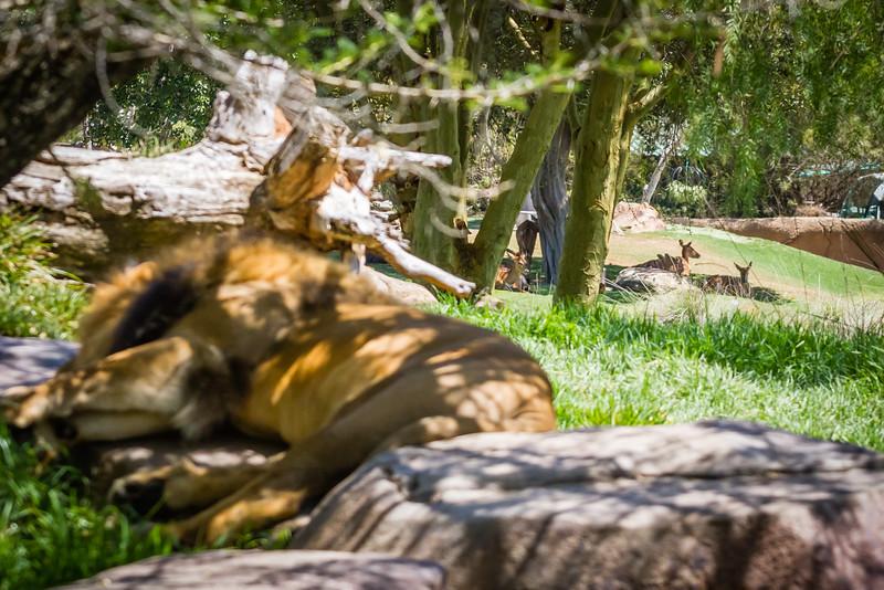 SD Zoo 2016-229