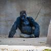SD Zoo 2016-344