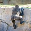 SD Zoo 2016-283