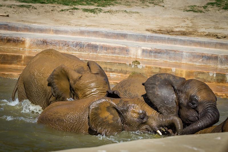 SD Zoo 2016-379