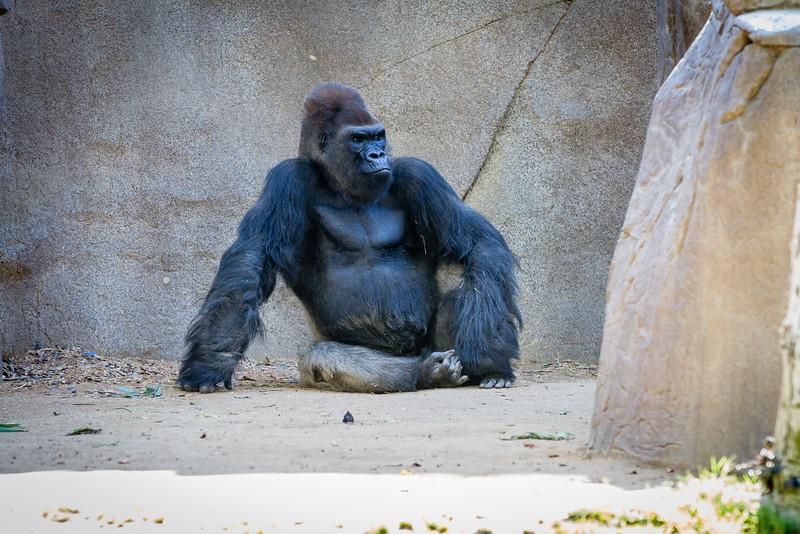 SD Zoo 2016-225