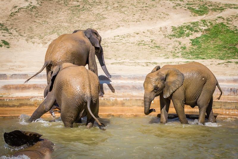 SD Zoo 2016-310