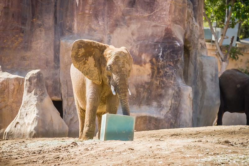 SD Zoo 2016-197
