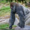 SD Zoo 2016-102
