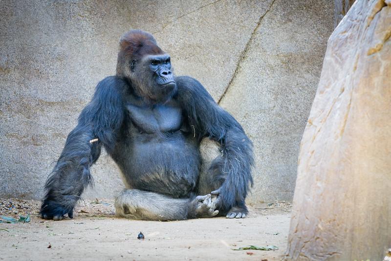 SD Zoo 2016-195