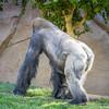 SD Zoo 2016-151