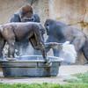 SD Zoo 2016-287