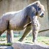 SD Zoo 2016-381