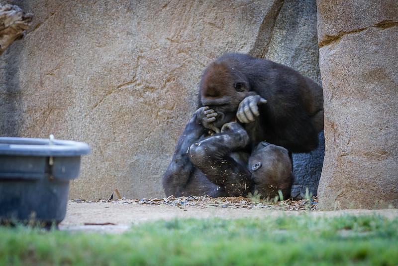 SD Zoo 2016-29-2