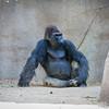SD Zoo 2016-200