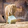 SD Zoo 2016-168