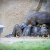 SD Zoo 2016-14-2