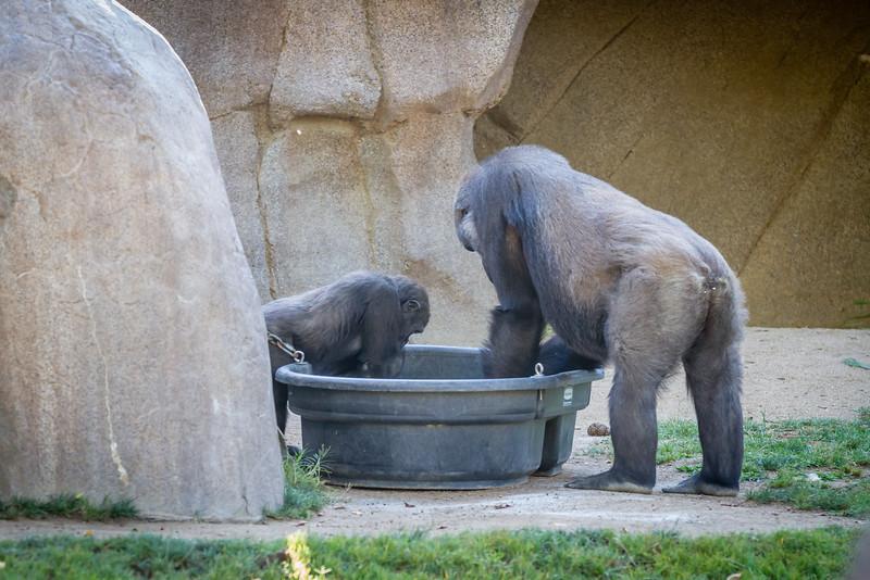 SD Zoo 2016-241