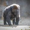 SD Zoo 2016-288